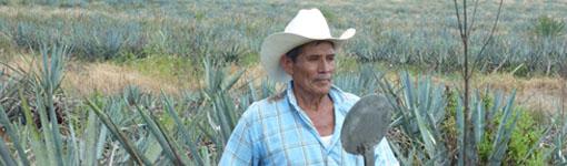 - Ein Jimador mit seinem Coa auf den Agavefeldern der Stadt Tequila